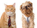 Cat and dog in glasses Royalty Free Stock Photo