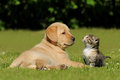 Cat and dog on the lawn Royalty Free Stock Images