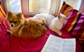 Cat and dog laying on the window red blanket stripped pillow Royalty Free Stock Photography