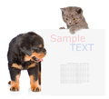 Cat and Dog peeking from behind empty board. isolated on white b Royalty Free Stock Photo