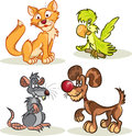 Cat, dog, rat, parrot Stock Photos