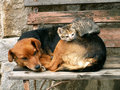 Cat and dog resting Stock Images