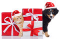 Cat And Dog With Santa Hat And...
