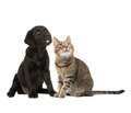 Cat and dog sitting and looking up Royalty Free Stock Photo