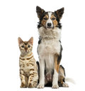 Cat and dog sitting together facing at the camera Royalty Free Stock Photos
