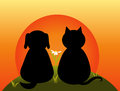 Cat and dog sitting together on the hill watch the sunset Royalty Free Stock Photos