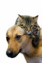 Cat and dog tabby sitting on a Royalty Free Stock Photos