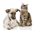 Cat and dog together isolated on a white background Stock Image