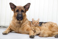 Cat and dog together lying on the floor Stock Image