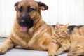 Cat and dog together lying on the floor Royalty Free Stock Images