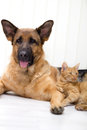 Cat and dog together lying on the floor Royalty Free Stock Photos