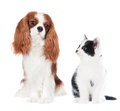 Cat and dog together on white Royalty Free Stock Photos