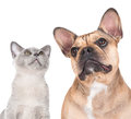 Cat and dog together on white Royalty Free Stock Photo