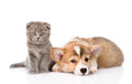 Cat And Dog Together.  On Whit...