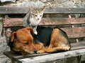 Cat and dog and valentine day Royalty Free Stock Photos