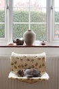 Cat dozing on radiator Stock Images