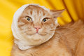 Cat ear ache with bandage at home Royalty Free Stock Photography