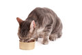 Cat eating food Royalty Free Stock Photography