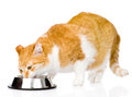 Cat eating food. isolated on white background Royalty Free Stock Photo
