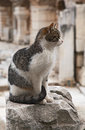 Cat in ephesus on a ruin of an ancient greek town Stock Photo