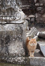 Cat in ephesus on a ruin of an ancient greek town Stock Photos