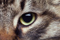 Cat eye in close up photo Royalty Free Stock Photo