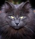 Cat eyes Royalty Free Stock Photography