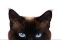 Cat eyes Royalty Free Stock Photo