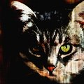 Cat face with green eye on grunge striped black background Royalty Free Stock Photo