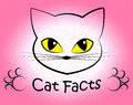 Cat facts shows truth data and felines representing info feline Stock Images