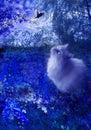 Cat and fairy bird at night