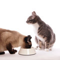 Cat with feeding bowl Royalty Free Stock Photo