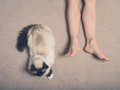 Cat and feet of young woman on carpet Royalty Free Stock Photo