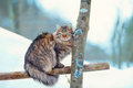 Cat on a fence sitting the Royalty Free Stock Photography