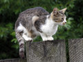 Cat on fence a wooden Royalty Free Stock Photo