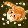 Cat in the fields cute red kitten daisies Stock Photography