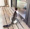 A Cat Figure