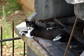 Cat on the fireplace Royalty Free Stock Photo
