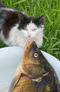 Cat and fish. Royalty Free Stock Image
