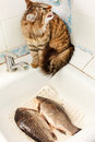 Cat and fish in the kitchen Royalty Free Stock Photos