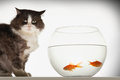 Cat by fishbowl with two goldfish sitting against white background Stock Photos