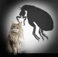 Cat and flea shadow concept graphic Stock Photography