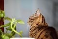 Cat and flower on the window tabby Royalty Free Stock Photo