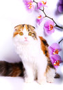 Cat and flowers Royalty Free Stock Photo