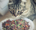 Cat and food Royalty Free Stock Photo