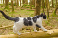 Cat in forest domestic named lolek explore the Royalty Free Stock Photo