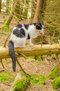 Cat in forest domestic named lolek explores the Stock Photo