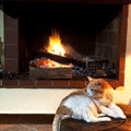 Cat in front of fireplace Royalty Free Stock Photo