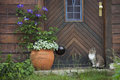 Cat in front of a wooden door house mecklenburg western pomerania germany Stock Photos