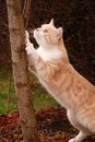 A cat in the garden is scraping at tree trunk Royalty Free Stock Photo